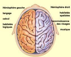 harmonie cerveau